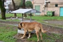 SOKAK HAYVANLARI - Tuzla Belediyesi Sokak Hayvanlarını Unutmadı