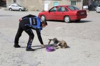Sivrihisar'da Sokak Hayvanları Aç Kalmıyor