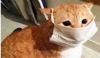 HAYVANAT BAHÇESİ - ABD'de ortaya çıkartıldı! Koronavirüste kedi tehlikesi