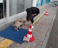 Yiyecek Bulmakta Zorlanan Sokak Hayvanlarına Vatandaş Desteği