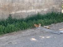 Anne Kedi Telef Olan Yavrusunun Başında Bekledi