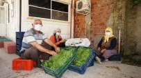 Asma Yapraklarıyla Aile Ekonomilerine Katkı Sağlıyorlar