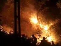 YANGINA MÜDAHALE - Rize'de orman yangını!