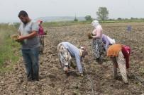Tarım İşçilerinin Aşırı Sıcaklarla Zorlu Sınavı