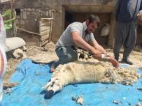 Mazıdağı'nda Koyun Kırkma Dönemi Başladı