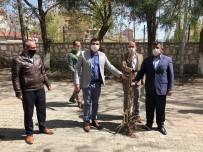 Diyadin Kaymakamı Doğan, 2 Bin Meyve Ağacını Vatandaşlara Dağıttı