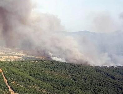 Kütahya ve Muğla'da orman yangını
