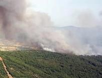 YANGINA MÜDAHALE - Kütahya ve Muğla'da orman yangını