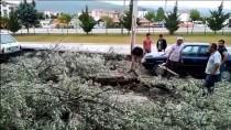 Samsun'da Şiddetli Rüzgar Nedeniyle Ağaç Ve Aydınlatma Direği Devrildi