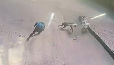 Köpekler bir anda saldırdı ve sonrası...!!!