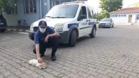 Yılan Tarafından Isırılan Kediye Polis Şefkati