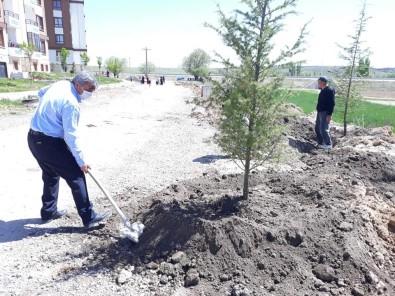 Altıntaş'ta Ağaçlandırma Çalışmaları