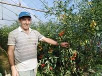 Emekli Öğretmen, Kurduğu Serada Organik Ürün Yetiştiriyor