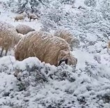 Kar Yağışı, Bazı Küçükbaş Hayvanları Telef Etti