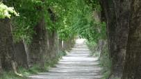 (Özel) Bu Yolda Yürümek İçin Türkiye'nin Her Yerinden Geliyorlar