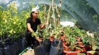 Genç Ziraat Teknikerinden Sarıgöl'e Tropikal Meyve Fidanı