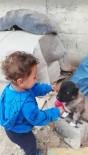 1 Buçuk Yaşındaki Çocuk İle Yavru Köpeğin Dostluğu Yürekleri Isıttı
