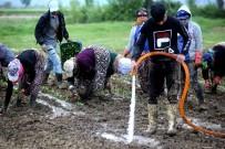 Çiftçiler Cumhurbaşkanı Erdoğan İçin Üretecek