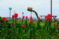 İnönü'de Baharın Müjdecisi Laleler Göz Kamaştırıyor