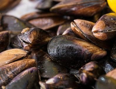İslam'a göre midye yemek haram mıdır?