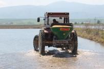 Manyas'ta Çeltik Ekimi Başladı