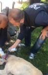 Mardin'de Boynuna Kablo Dolanan Köpeği Polis Kurtardı