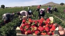Nevşehir'de Deneme Amaçlı Üretmeye Başladığı Çilek İle Dış Pazarlara Açıldı