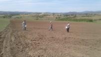 Sındırgı'da Belediye Boş Arazilerinde Tarım Yapıyor