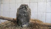 Tunceli'de Bulunan Baykuş Yavruları Koruma Altına Alındı
