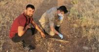 Şanlıurfa'da Çöl Varanı Görüldü