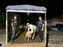 Konya'da 40 Küçükbaş Hayvanı Çalan 7 Şüpheli Suçüstü Yakalandı