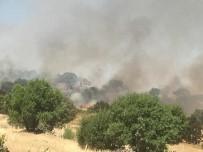 Midyat'ta Üzüm Bağı Ve Orman Yangını