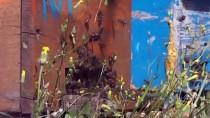Arıcıların Flora Zengini Munzur Dağları'ndaki Zorlu 'Bal' Mesaisi