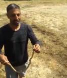 Evinde Yakaladığı Yılanı Doğaya Bıraktı