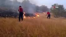 Mardin'deki Orman Yangınında 20 Hektar Alan Zarar Gördü