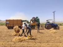 Mardin'de Mercimek Verimi Çiftçinin Yüzünü Güldürdü