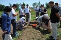 Çiftçiye Yeni Gelir Kapısı Açıklaması Salep