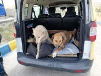 Mardin'de Yaralı Kedi Ve Köpekler Ankara'ya Sevk Edildi