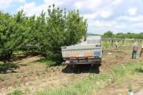 Direksiyonu Kilitlenen TIR Kiraz Bahçesine Girdi