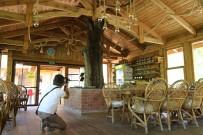 Artvinli İşletmecinin Ağaç Sevgisi Görenleri Şaşkına Çeviriyor