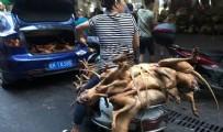 KÖPEK - Koronavirüs akıllarını başlarına getirmedi! Köpek eti festivali başladı