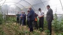 Kastamonu'da Doludan Zarar Gören Yerlerde İnceleme Başlatıldı