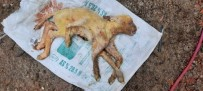 6 Bacaklı Kuzu Görenleri Şaşırttı, Doğar Doğmaz Telef Oldu