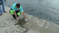 Tuzla'da Atık Problemine Dikkat Çekmek İçin Denizden Çuvallarla Atık Çıkarıldı