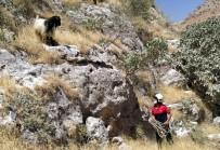 Dağda Mahsur Kalan Keçiyi İtfaiye Ekipleri Kurtardı