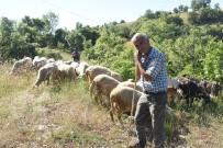 (Özel) Koyunları Telef Olan Çelikel Çiftinden Cumhurbaşkanına Teşekkür