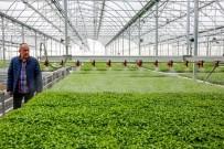Meram Sebze Fidesi Üretim Tesisinde Üretilen 3 Milyon Fide Toprakla Buluştu