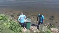 Küçükçekmece'de Balık Ölümleri Devam Ediyor