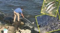 SUDAN - Küçükçekmece'deki balık ölümlerine Bakanlık incelemesi!