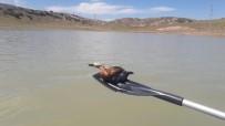 Yasa Dışı Balık Avı İçin Serilen Ağlar Yabani Kuşlara Mezar Oluyor
